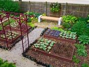 Сдается дом,  огород,  хоз. постройки,  колодец,  сад в д. Карповичи